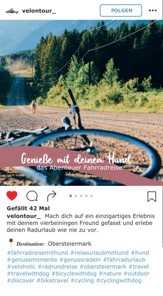IG Fahrradreise mit Hund