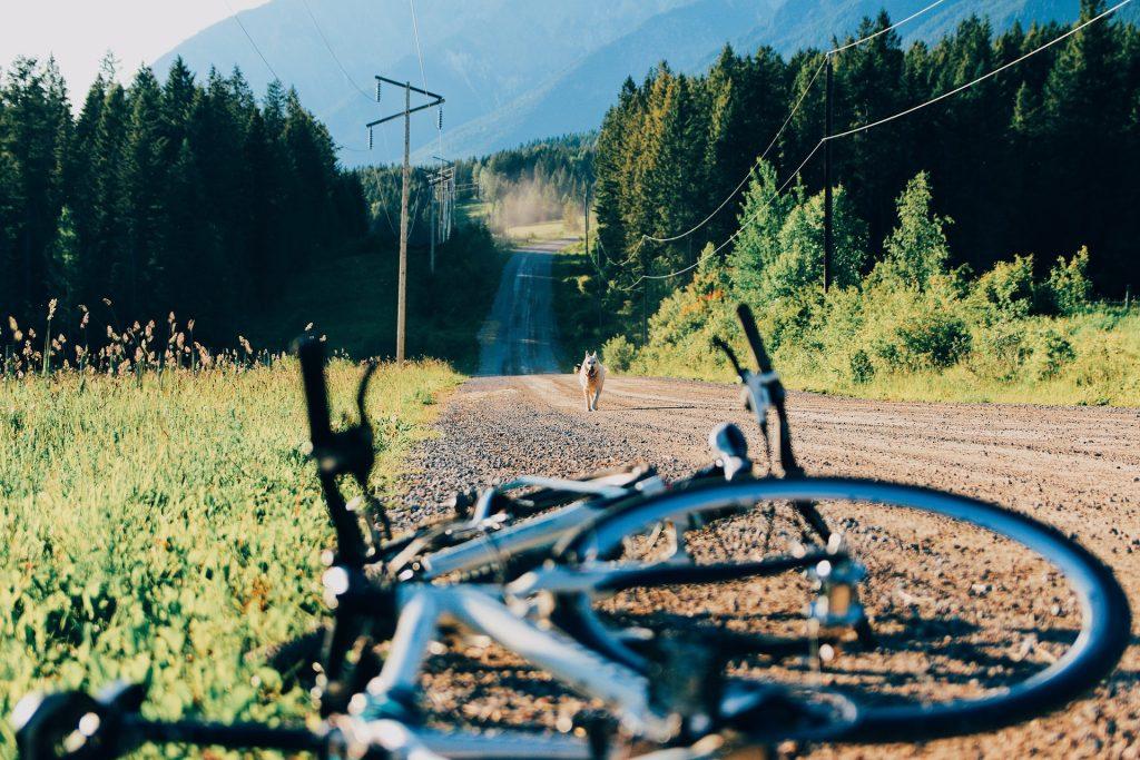 Laufender Hund in freier Natur mit Fahrrad